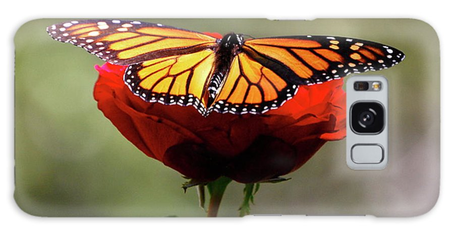Monarch Butterfly Galaxy S8 Case featuring the photograph Soft Landing by Debbie Karnes