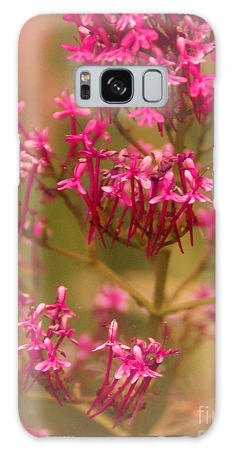 Flower Galaxy S8 Case featuring the photograph Soft Pirouette by Linda Shafer