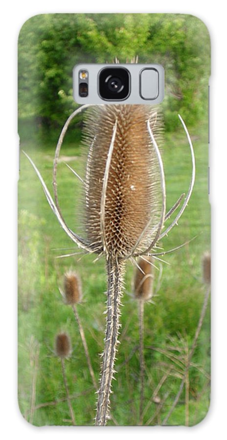 Thistle Galaxy Case featuring the photograph Something Old Something New by Peggy King