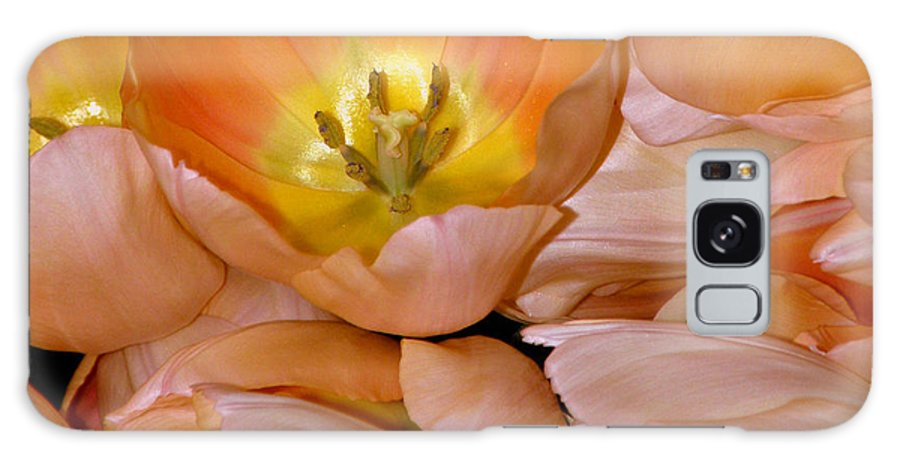 Tulips Galaxy S8 Case featuring the photograph Somewhat Peachy by Trish Tritz
