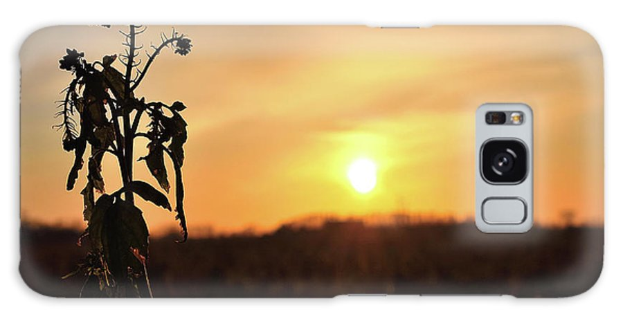 Sonnenuntergang Blume Flowwer Sky Himmel Galaxy S8 Case featuring the photograph Sonnenuntergang by Scimitarable