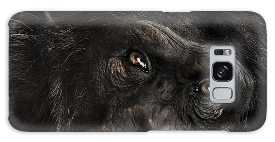 Chimpanzee Galaxy S8 Case featuring the photograph Sorrow by Paul Neville