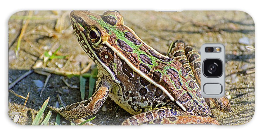 Frog Galaxy S8 Case featuring the photograph Southern Leopard Frog by Kenneth Albin