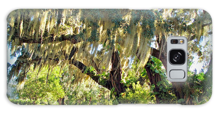 Orlando Galaxy S8 Case featuring the photograph Southern Pathway by Joan Minchak