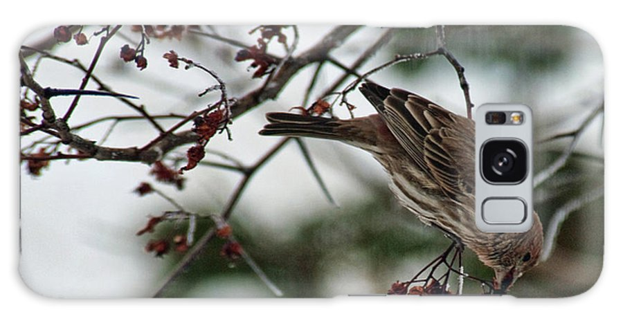Bird Galaxy S8 Case featuring the photograph Sparrow Eating Berry by David Arment