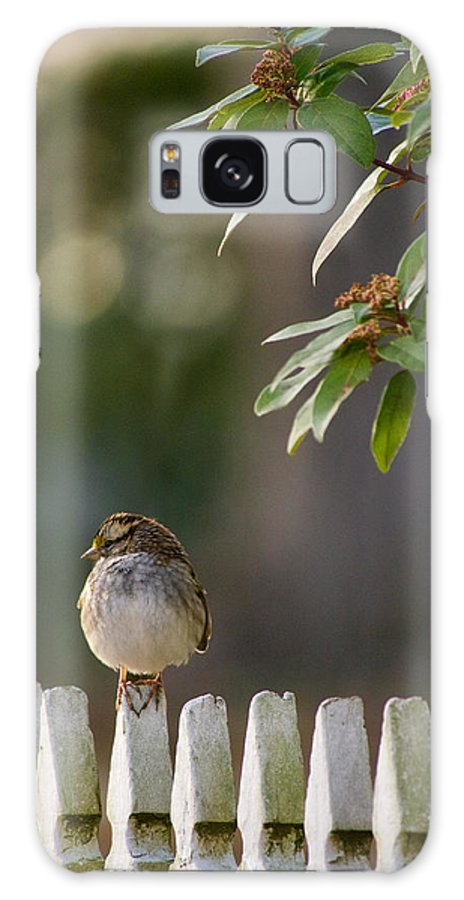Sparrow Galaxy S8 Case featuring the photograph Sparrow In Colonial Williamsburg by Rachel Morrison