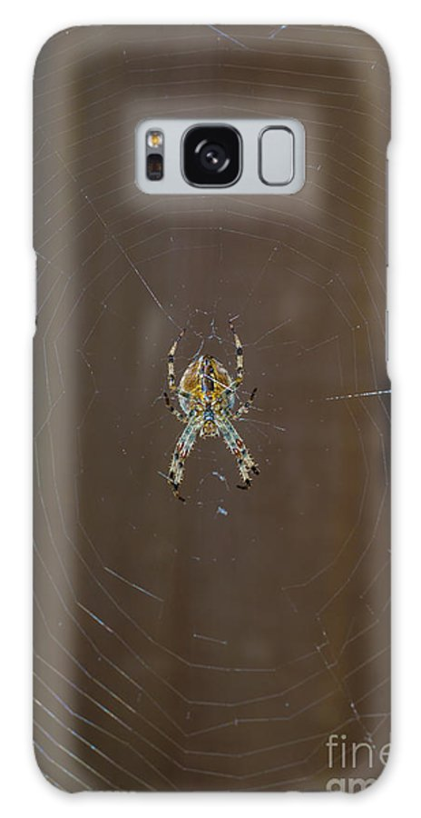 Spider Galaxy S8 Case featuring the photograph Spider by F Helm