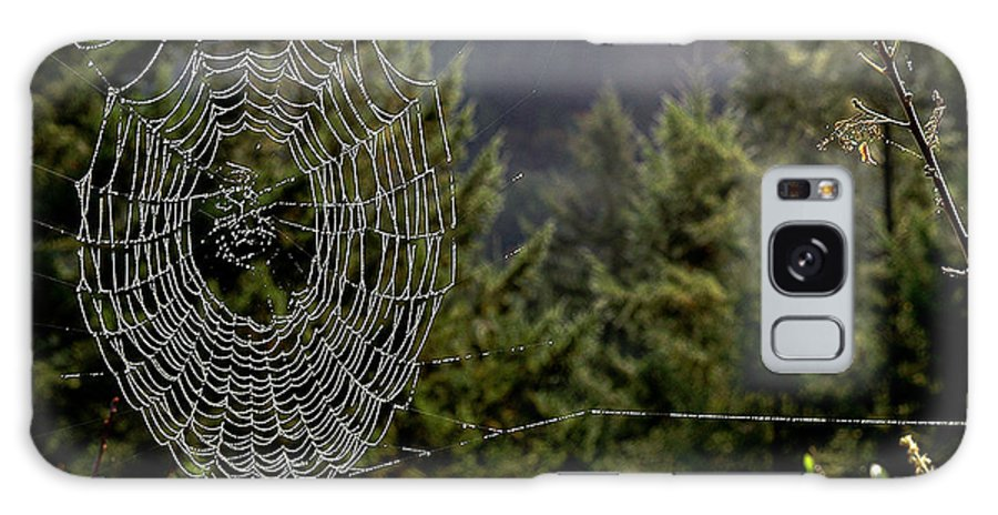 Spider Webs Galaxy S8 Case featuring the photograph Spider Web Overlook by Michael Roll