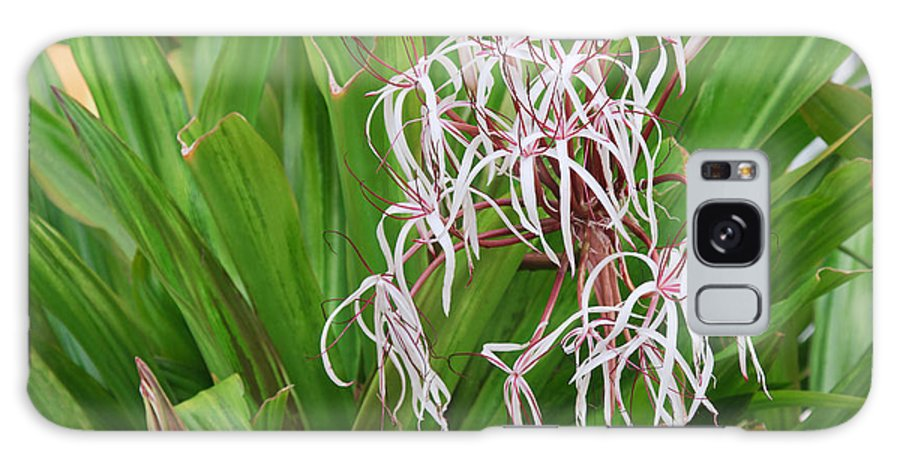 Crinum Galaxy S8 Case featuring the photograph Spider,lily by Jamie Gray