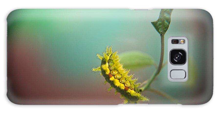 Galaxy S8 Case featuring the photograph Spiny Oak Slug Moth 5 by Douglas Barnett