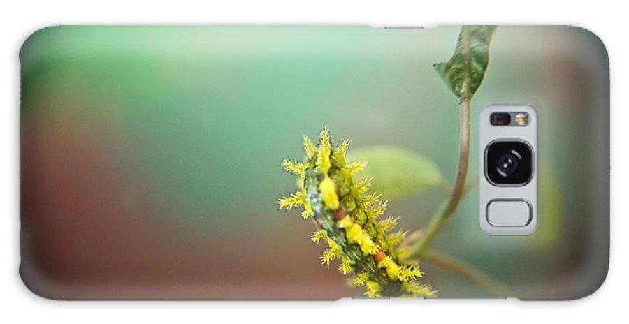 Cove Galaxy S8 Case featuring the photograph Spiny Oak Slug Moth 7 by Douglas Barnett