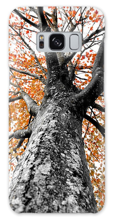 Tree Galaxy S8 Case featuring the photograph Splash Of Color by Greg Fortier