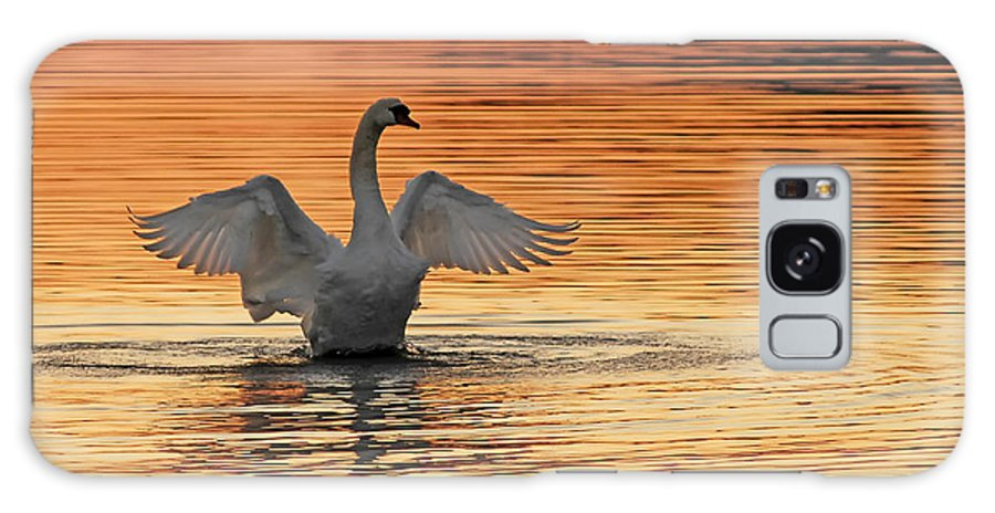 Swans At Dawn Galaxy S8 Case featuring the photograph Spreading Her Wings In Gold by Randall Branham