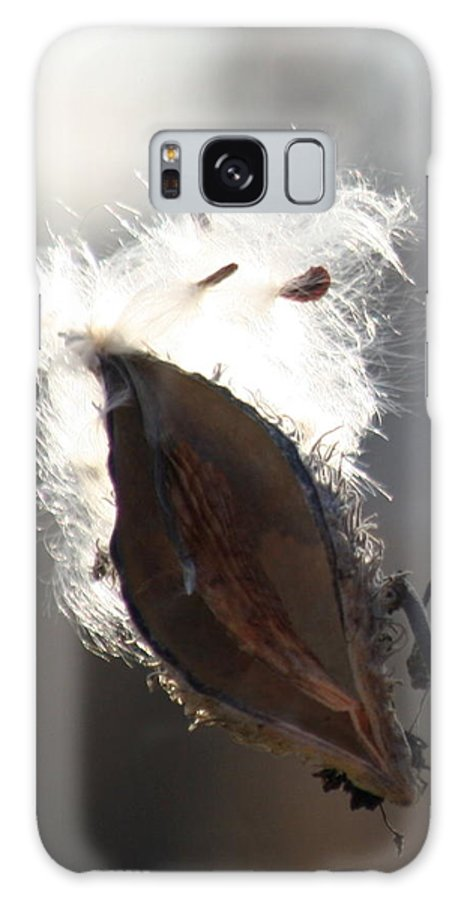 Milkweed Galaxy S8 Case featuring the photograph Spreading Seeds IIi by Diane Merkle