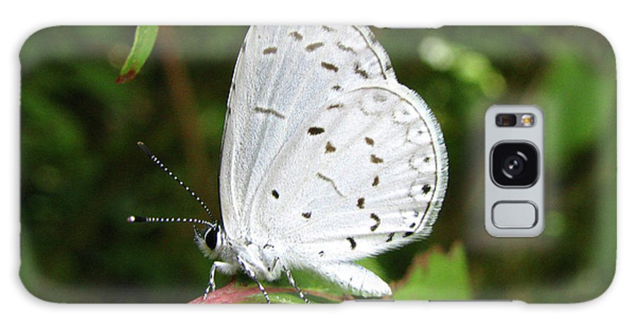 Butterfly Galaxy S8 Case featuring the photograph Spring Azure Butterfly by Donna Brown