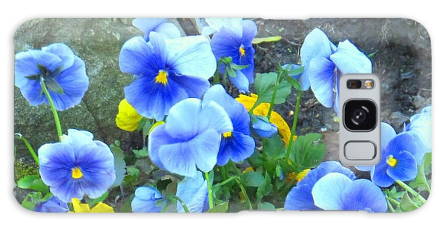Blue Galaxy S8 Case featuring the photograph Spring Beauties by Ian MacDonald