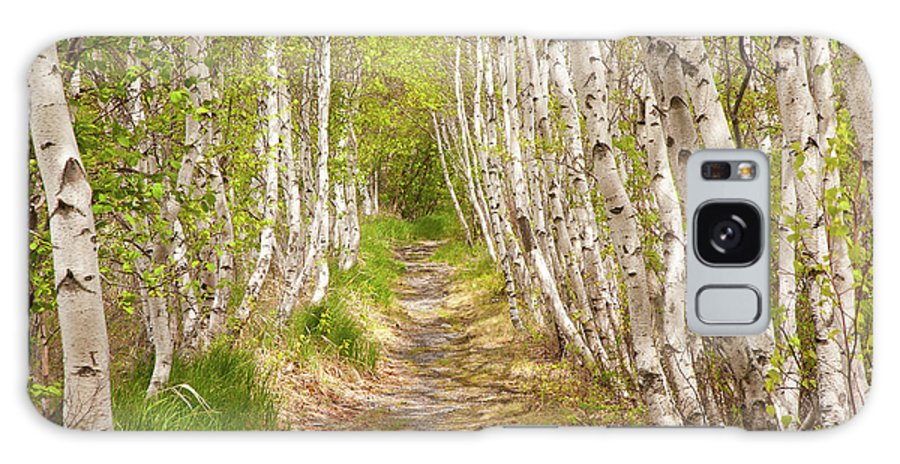 Acadia National Park Galaxy S8 Case featuring the photograph Spring Birch by Susan Cole Kelly