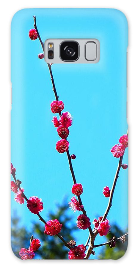 Posters Galaxy S8 Case featuring the photograph Spring Blooms by Sonali Gangane