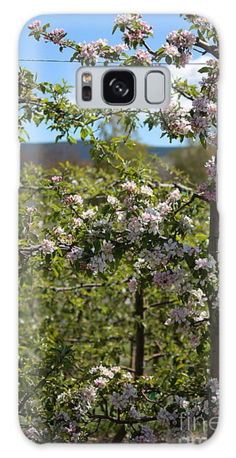 Blossoms Galaxy S8 Case featuring the photograph Spring Blossoms Day by Carol Groenen