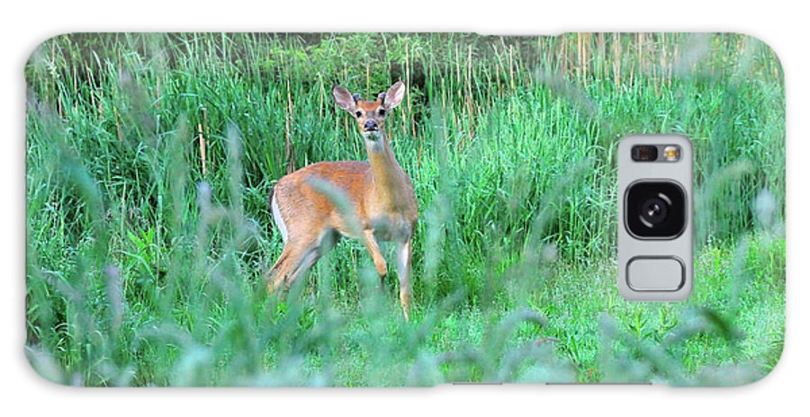 Deer Galaxy S8 Case featuring the photograph Spring Deer by David Arment