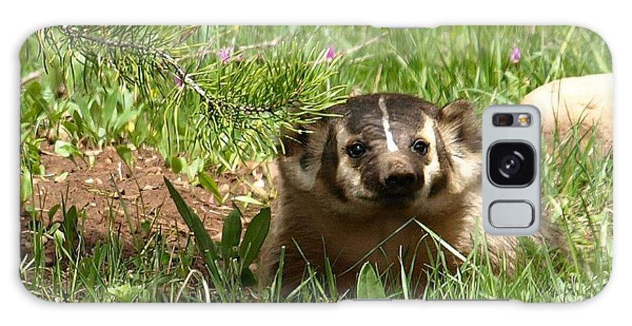 Badger Galaxy S8 Case featuring the photograph Spring Fever by DeeLon Merritt