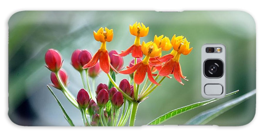 Spring Time Bloom Galaxy S8 Case featuring the photograph Spring Folly by Mark Stratton