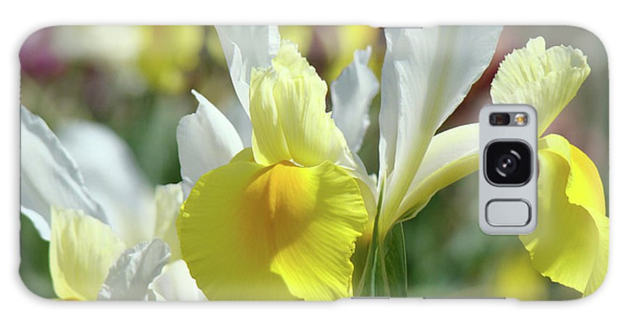 Iris Galaxy S8 Case featuring the photograph Spring Irises Flowers Art Prints Canvas Yellow White Iris Flowers by Baslee Troutman