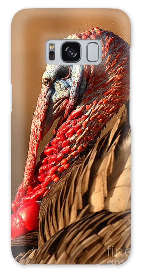 Turkey Galaxy Case featuring the photograph Spring Portrait Of Wild Turkey Tom by Max Allen