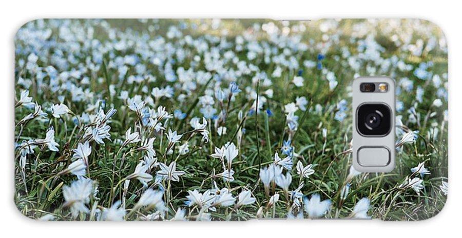 Star Flower Galaxy S8 Case featuring the photograph Spring Starflower Field by Rachel Morrison