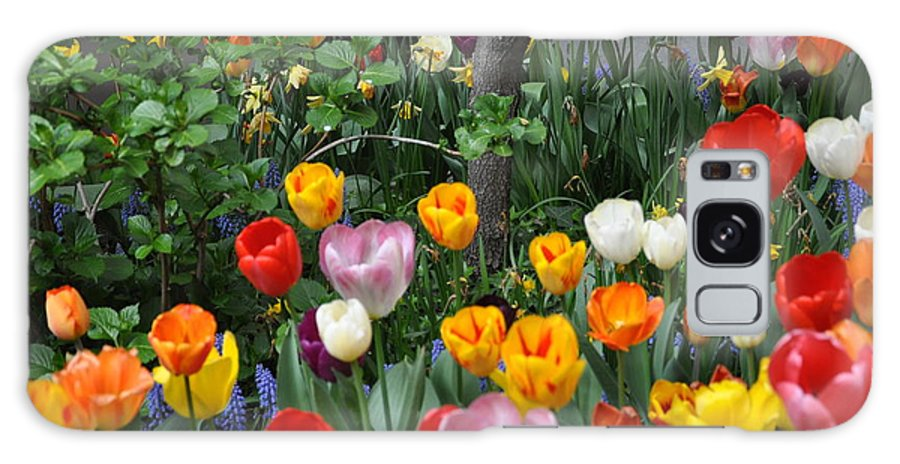 Tulips Galaxy S8 Case featuring the photograph Spring Tulips by Denise Laurin