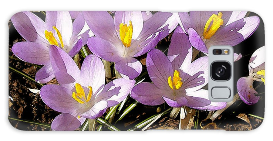 Flower Galaxy S8 Case featuring the photograph Springtime Crocuses by Michelle Calkins