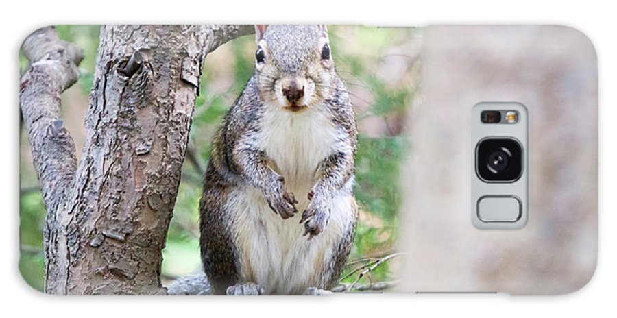 Squirrel Galaxy S8 Case featuring the photograph Squirrel Looking At Photographer And Waiting To Be Fed by Alex Grichenko