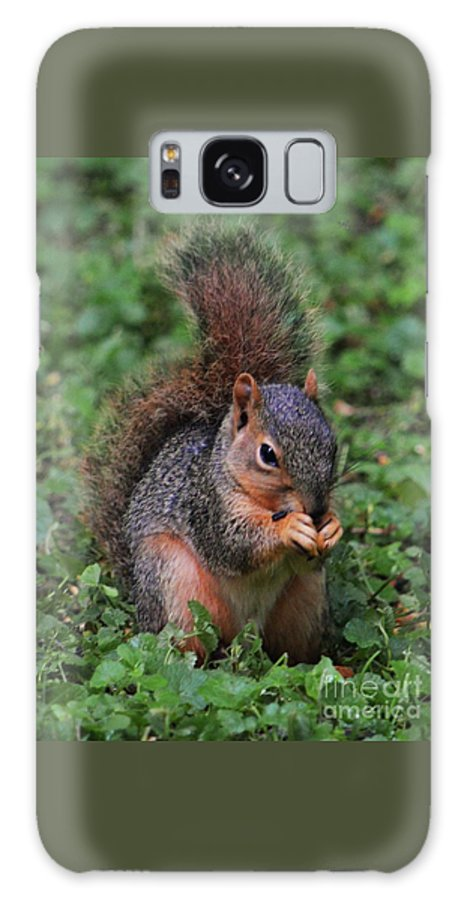 Squirrel Art Animal Portrait Outdoors Nature Cute Close Up Nature Garden Visitor Adorable Vertical Vision Canvas Print Metal Frame Wood Print Poster Print Available On T Shirts Tote Bags Mugs Throw Pillows Shower Curtains Spiral Notebooks And Phone Cases Galaxy S8 Case featuring the photograph Squirrel Portrait # 3 by Marcus Dagan