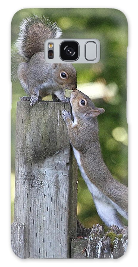 Affection Galaxy S8 Case featuring the photograph Squirrelly Affection by Angie Vogel