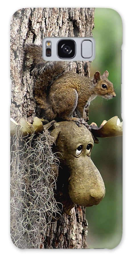 Squirrel.moose Galaxy S8 Case featuring the photograph Squirrelly Thoughts by Debbie May