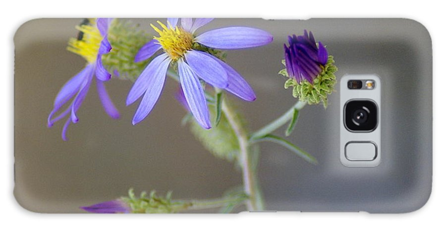 Flowers Galaxy S8 Case featuring the photograph Stages Of Development by Ben Upham III