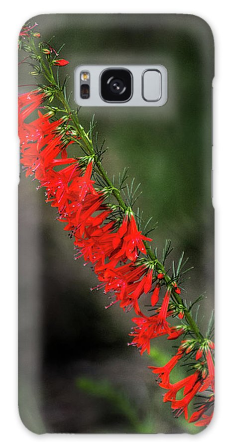 Standing Cypress Galaxy S8 Case featuring the photograph Standing Cypress by David Werner