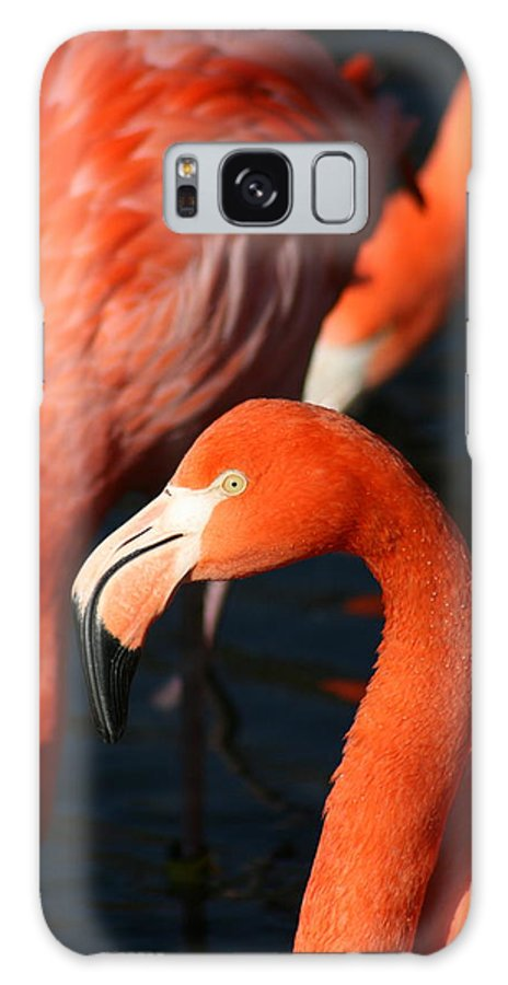 Pink Galaxy S8 Case featuring the photograph Standing Out In A Crowd by David Dunham