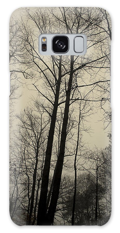 Trees Galaxy S8 Case featuring the photograph Standing Tall by Ayesha Lakes