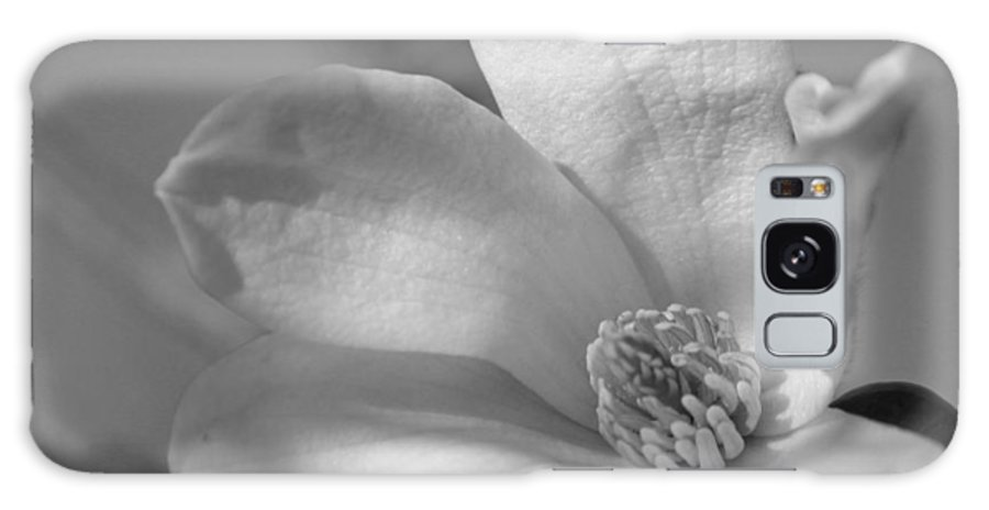 Greeting Card Galaxy S8 Case featuring the photograph Star Magnolia In Black And White by Suzanne Gaff