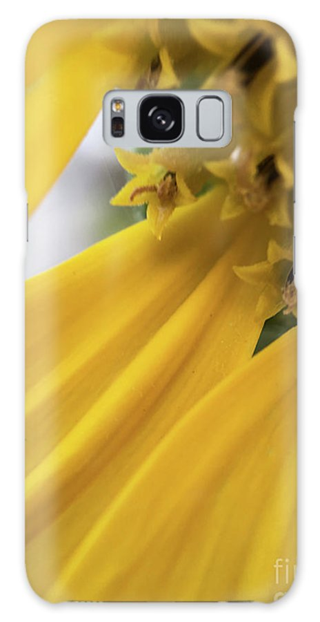 Flower Art Galaxy S8 Case featuring the photograph Star Tails by Gary Andre