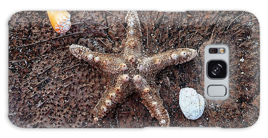 Beach Galaxy S8 Case featuring the photograph Starfish And Seashells by Christopher Shellhammer
