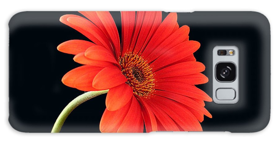 Flower Galaxy S8 Case featuring the photograph Stemming Beauty by Carol Milisen