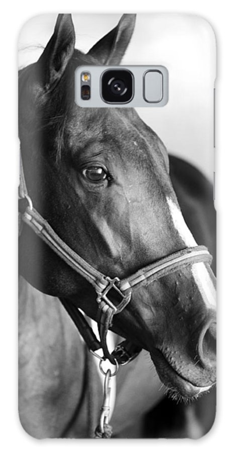 Horse Galaxy S8 Case featuring the photograph Horse And Stillness by Marilyn Hunt