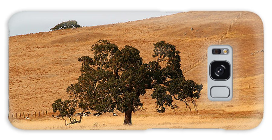 Oak Tree In The Golden Hills Galaxy S8 Case featuring the photograph Stoic Oak Tree With The California Golden Landscape In The Summer by Wernher Krutein