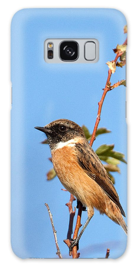 Stonechat Galaxy S8 Case featuring the photograph Stonechat On Branch by Bob Kempp