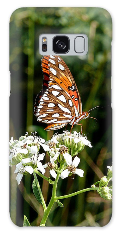 Butterfly Galaxy S8 Case featuring the photograph Stopping For A Snack by Mark Grayden