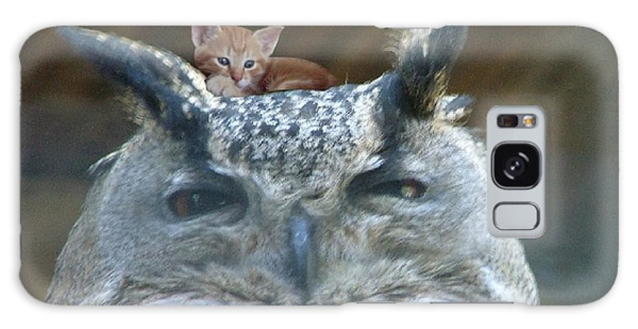 Owl Kitten Wildlife Bird Nature Cat Kittens Cute Lovable Friends Bff Galaxy S8 Case featuring the photograph Strange by Fun Cards