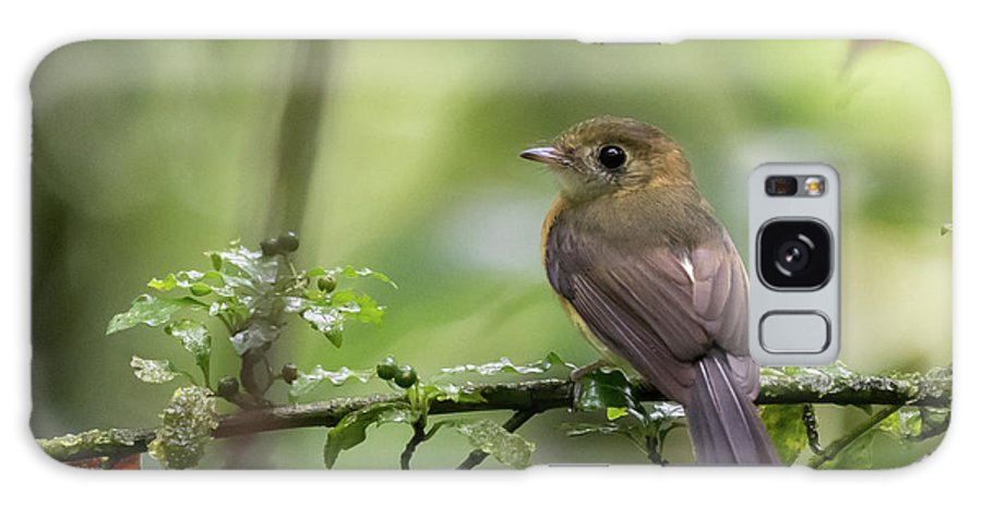 Costa Rica Galaxy S8 Case featuring the photograph Sulphur-rumped Flycatcher by Mike Timmons