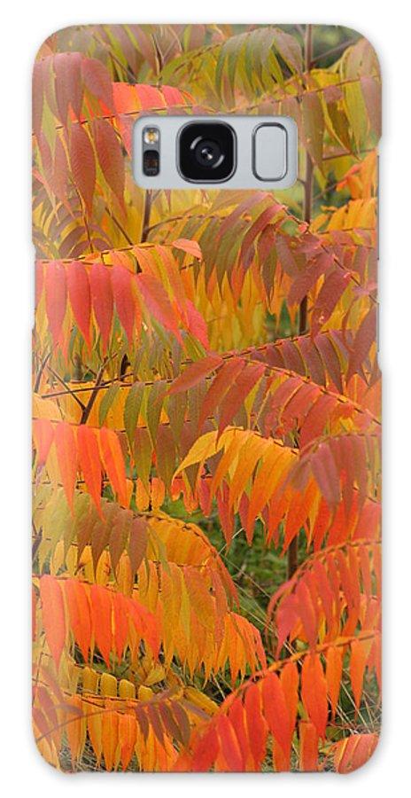 Sumac Galaxy S8 Case featuring the photograph Sumac by Doris Potter